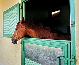 Horse Stable in France